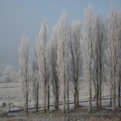 waterland in de winter