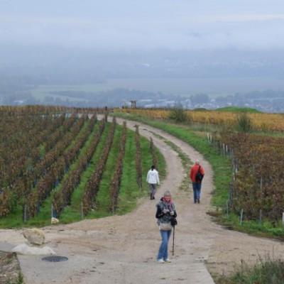 wandeling door de wijngaarden