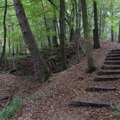 bos bij perchingbar