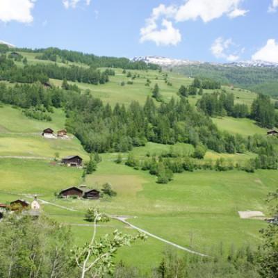 groene alpenweiden