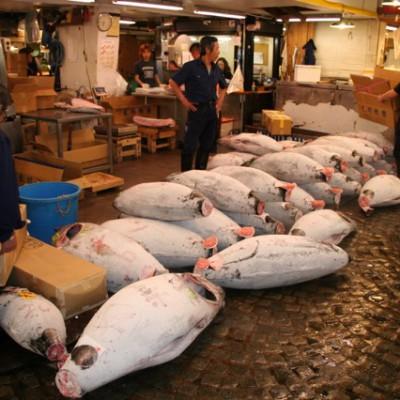 tonijn, wat een joekels, bevroren dus wit uitgeslagen